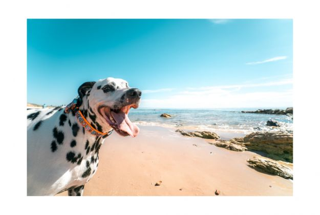 Pets stay at the Beach for FREE
